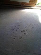 Kløver Ole-Wass hytten - hilsen fra murerens hund